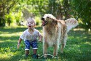 bebek ve hayvanlar