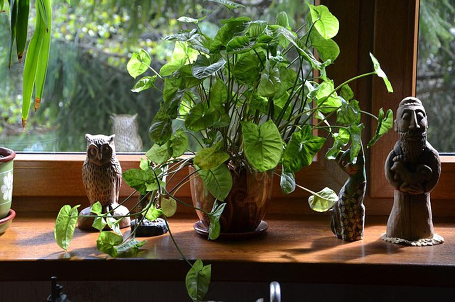zehirli ev bitkileri